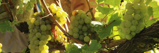 Dia do Malbec, novo Nature Rosé de Adolfo Lona, colheita na Villa Francioni…