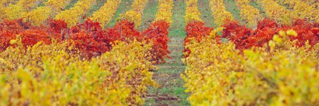 Alentejo, uma região de bons vinhos