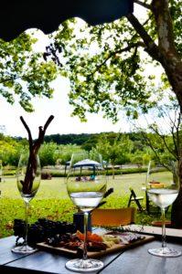 wine garden (33)