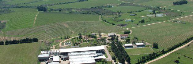 Os primeiros vinhos da Campanha Gaúcha